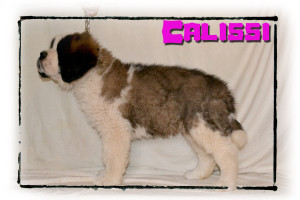 Calissi_8wks_2 copy