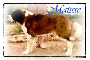 Matise adult