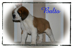 balto_8wks_2rs
