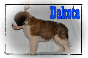 Dakota_7wks_rs