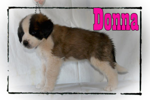 Donna_7wks_rs
