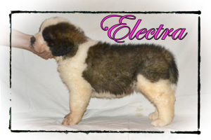 Electra_6wks_rs